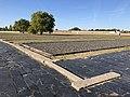 Sachsenhausen kz IMG 8101.jpg