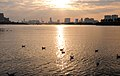 Sailor - panoramio.jpg