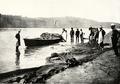 Salmon haul in Columbia River.png