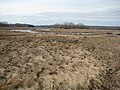 Salt marsh (8435974308).jpg