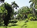 San Juan Botanical Garden - DSC06981.JPG
