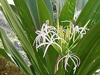 San Juan Botanical Garden - DSC07002.JPG