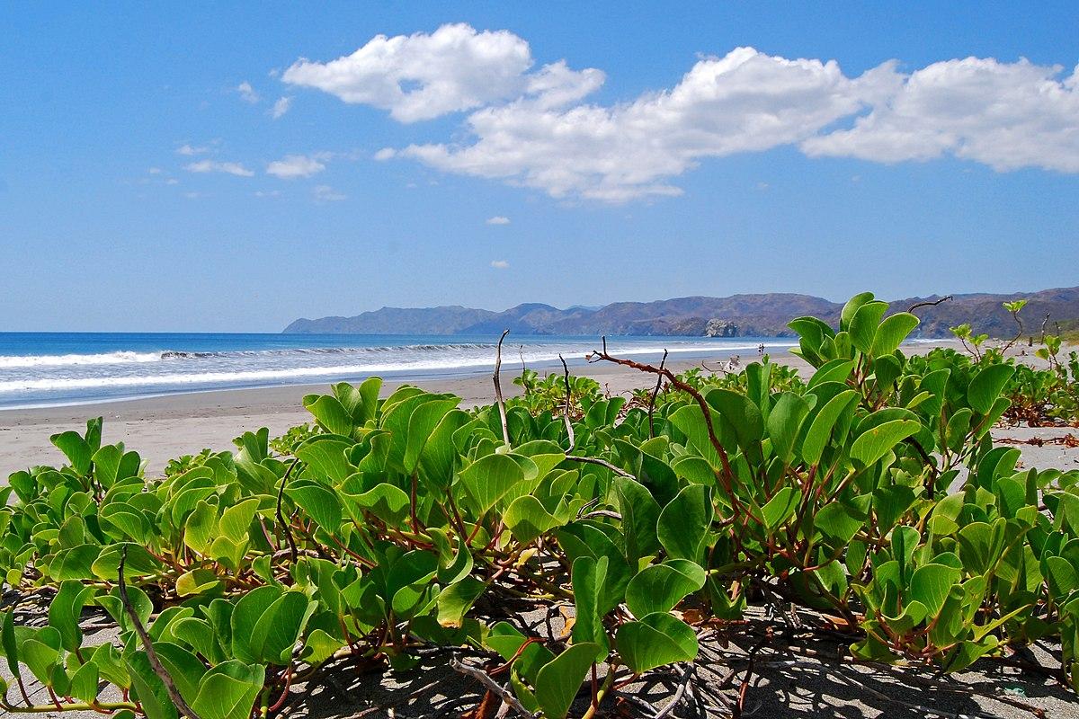 Parque nacional Santa Rosa - Wikipedia, la enciclopedia libre