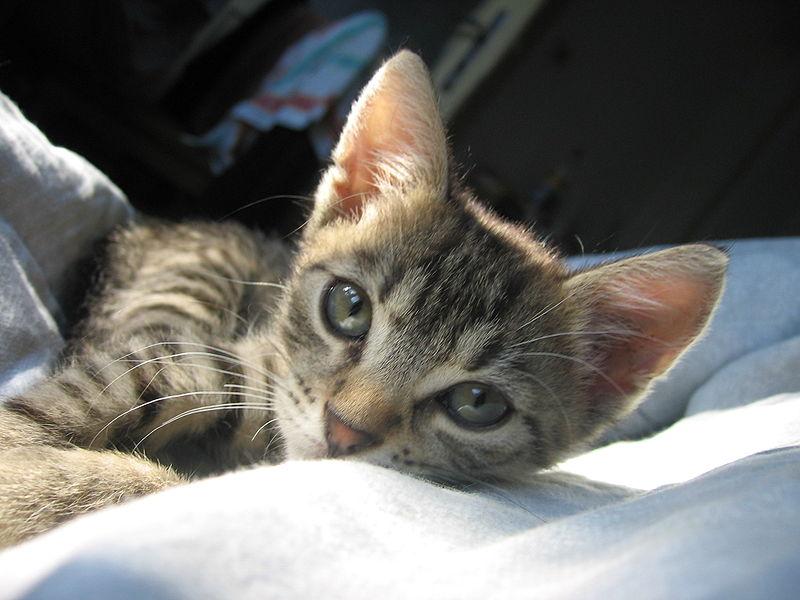 Obrázok:Satisfied cat.jpg
