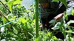 Satpara Irrigation Project (16292662050).jpg
