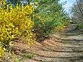Sayen Gardens (7058924207).jpg