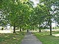 Scarlet Oak avenue in Oakwood Park, N14 - geograph.org.uk - 317114.jpg