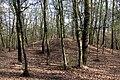 Schandorf - Tumulis in Bauernwald II (04).jpg