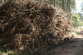 Quand la mémoire va ramasser du bois mort
