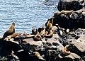 Sea Lions (9225599907).jpg