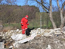 Search and rescue dog Flickr.jpg