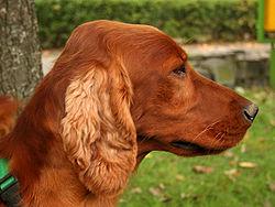 Dogs Ireland Sale