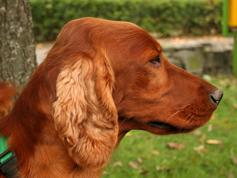 Golden Ears Dog Grooming