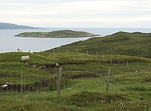 Sheep grazing near Cliasmaol.jpg