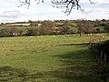 Sheep grazing near Tregony. - geograph.org.uk - 412762.jpg