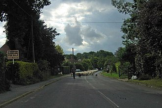 Rolvenden Layne - Image: Sheep in road, Rolvenden Layne geograph.org.uk 890843