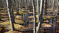 Sifton Bog - London, Ontario 01.jpg