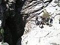 Sima Honda - panoramio.jpg