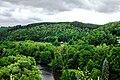 Slavkovský les nad Tašovicemi.jpg