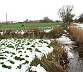 Snow in marsh pastures - geograph.org.uk - 1658541.jpg