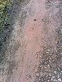 Soil in Rowrah.jpg