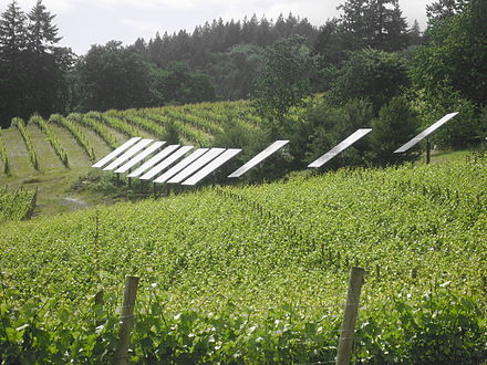 Sustainable agriculture combined with renewable energy generation
