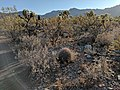 Sonoran Desert plants.jpg