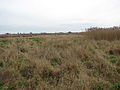 Southeasterly view across marshland - geograph.org.uk - 1106933.jpg