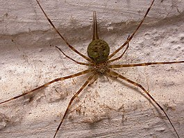 Spider bangalore wall.jpg