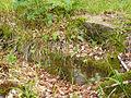 Spiegelburg Münden Steine.jpg
