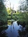 Spiegelnde Landschaft im Tegeler Fließ, Naturschutzgebiet Berlin.jpg