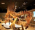 Spinosaurus attacking Onchopristis.jpg