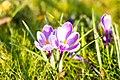 Spring (203315225).jpeg