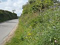 Springtime verge near Pencoose - geograph.org.uk - 1312512.jpg