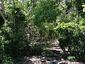 Staircase covered in greenery - panoramio.jpg