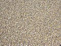 Starr-030923-0252-Aleurites moluccana-green sand beach-Hakioawa-Kahoolawe (24531929492).jpg