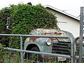 Starr-090430-6565-plant-Neonotonia wightii-smothering old junk cars-Kula.jpg
