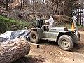 Starr-101103-9497-Pinus sp-habitat with Kim riding log moving tractor-Polipoli-Maui (25030182856).jpg