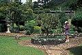 Starr 980601-1503 Pinus sp..jpg