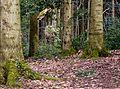 Sternwalddrache (Thomas Rees) jm26376.jpg