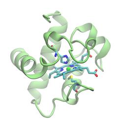 Cytochrom c6 (Chlamydomonas reinhardtii)