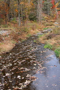 Sugar Hollow Creek looking downstream.JPG