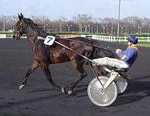 Sulky racing Vincennes DSC03728 cropped.JPG