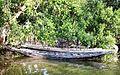 Sundarban (59).jpg