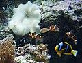 Sunshine Aquarium 3-22 (25778439943).jpg