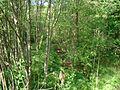 Svente Parish, LV-5473, Latvia - panoramio - alinco fan (8).jpg