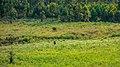 Swaziland (33505428742).jpg