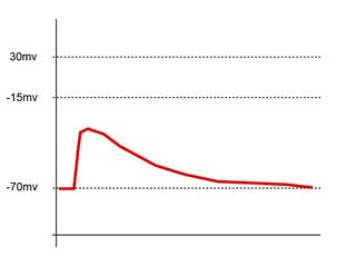 Excitatory postsynaptic potential process causing temporary increase in postsynaptic potential