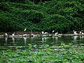 Taipa Wetland 凼仔濕地 - panoramio.jpg