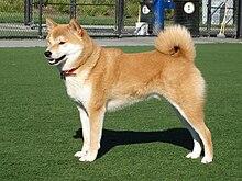 Gifts for Shiba Inu Dog Lovers
